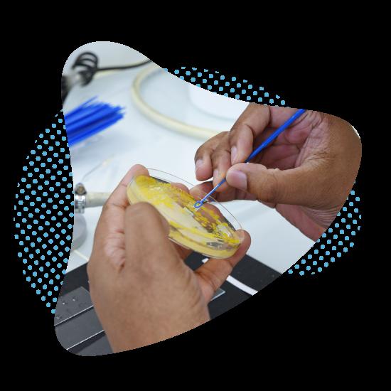 service identification microbienne ACM Pharma